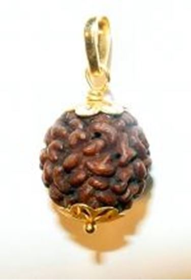 Picture of Rudraksha Two Mukhi